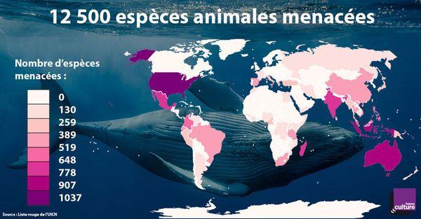 738_especes-menacees-large-2