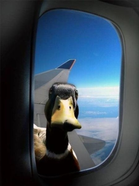 Canard - Avion