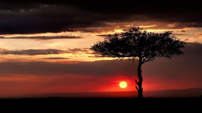 Coucher de soleil - Savane - Sunset