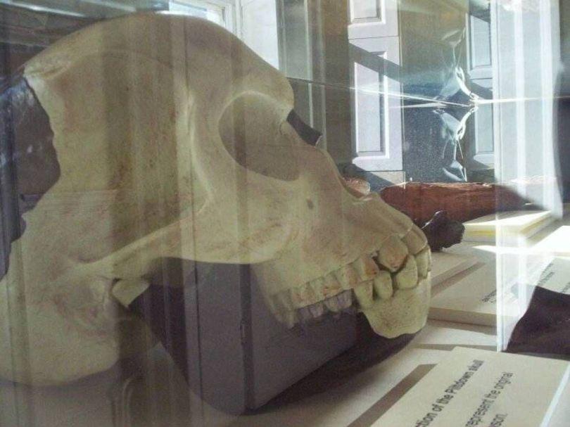 Crâne de l_homme de Piltdown - British Museum