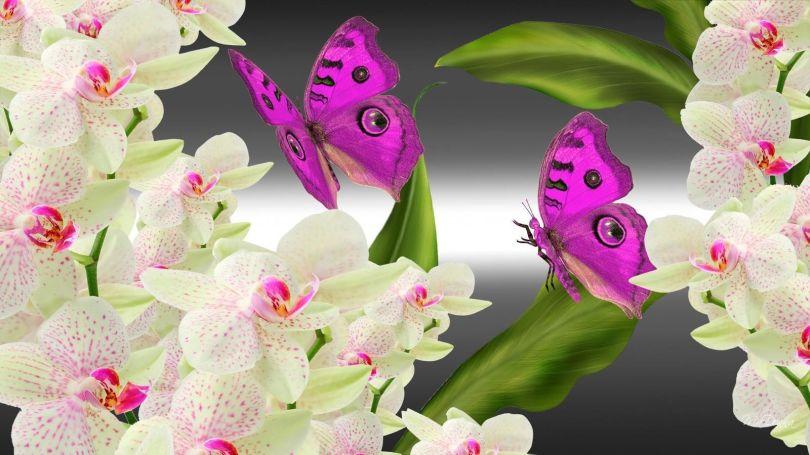 Orchidées papillons