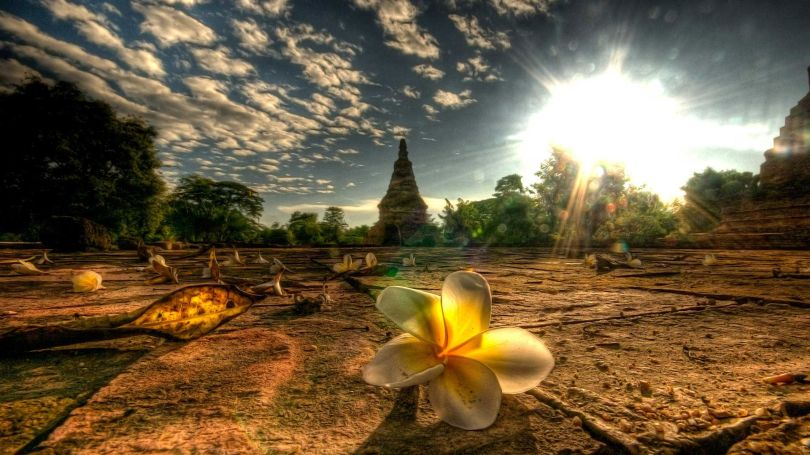 Late afternoon sunlight on a flower at a temple site.
