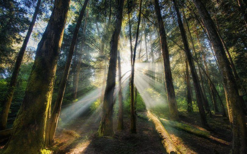 Arbre - Tree - Forêt