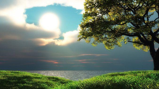 Arbre - Tree