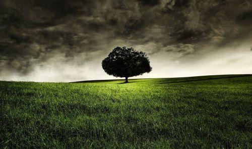Chêne - Arbre - Oak - Tree - 2