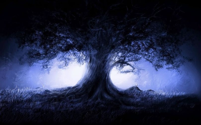 Chêne - Arbre - Oak - Tree - 3