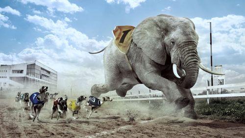 Eléphant - Lévriers - Course - 10820