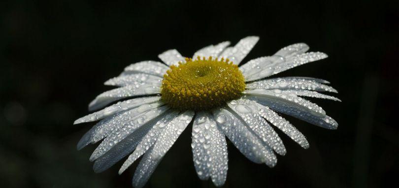Fleurs - 351