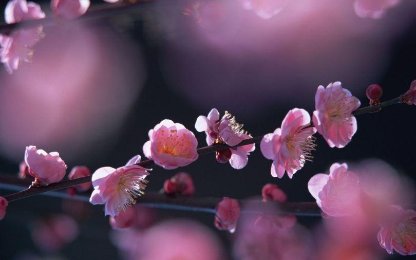 Fleurs - 387