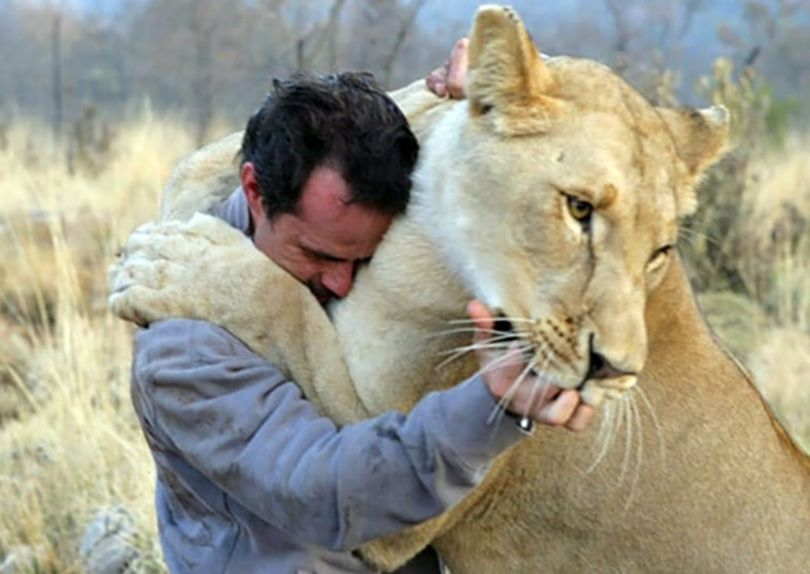 Kevin Richardson - Lion - 5