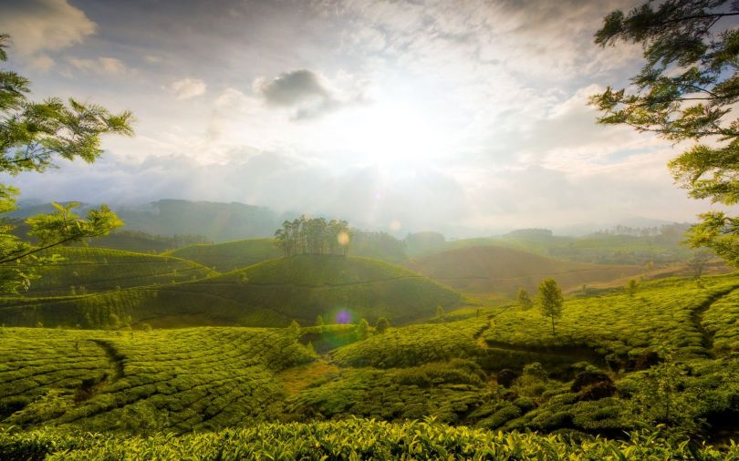 Munnar Hills Kerala India - Inde