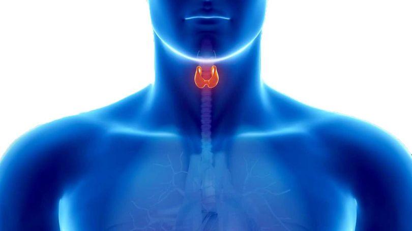 Thyroïde - 1