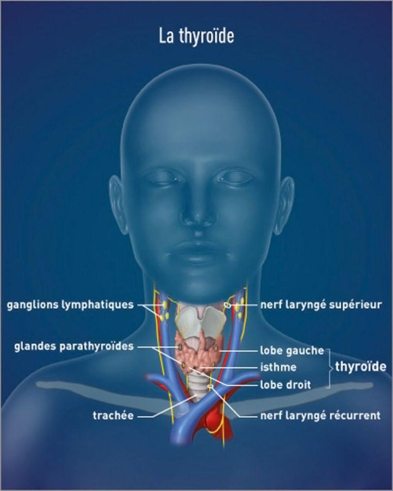 Thyroïde - 2