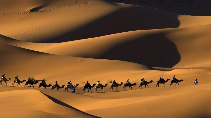 Désert - Algérie - Chameaux