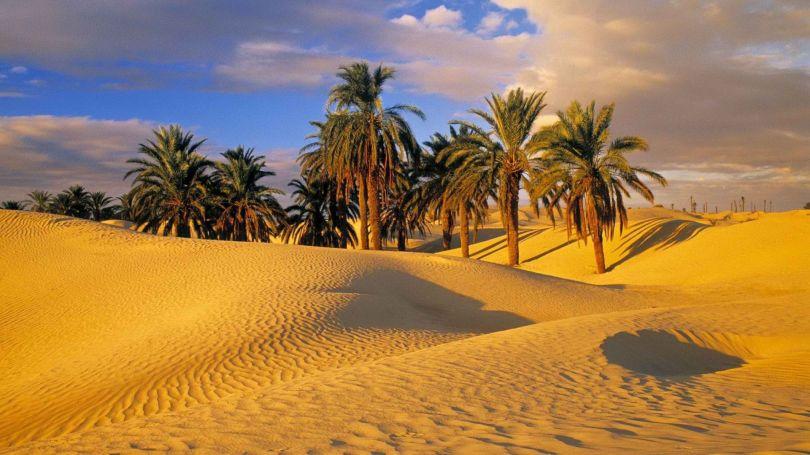 Désert - Palmiers - Algérie