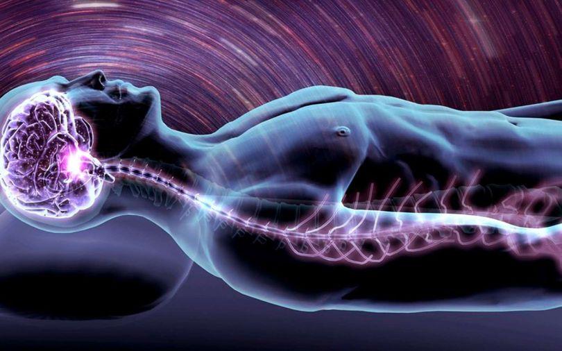 Corps humain allongé - Cerveau