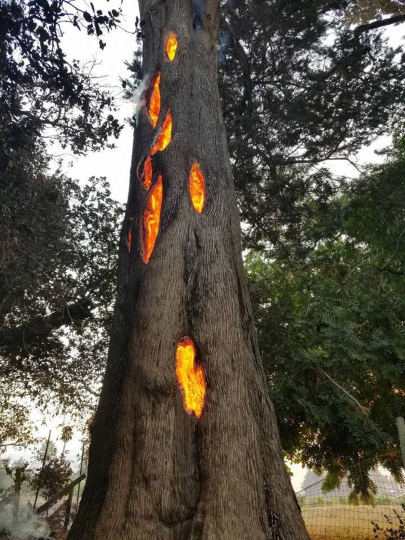 Arbre en feu - Tree fire - 1