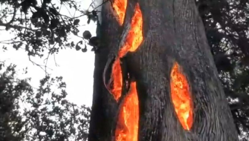 Arbre en feu - Tree fire - 2