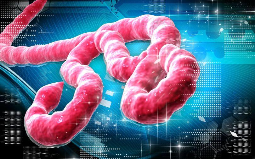Ebola Virus - 1