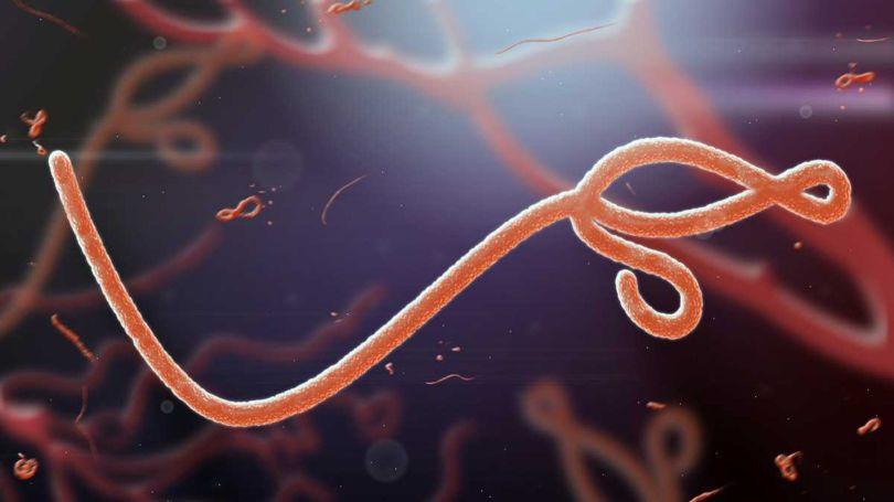 Ebola Virus - 2