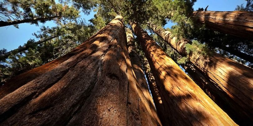 Giant Sequoia National Monument - 1
