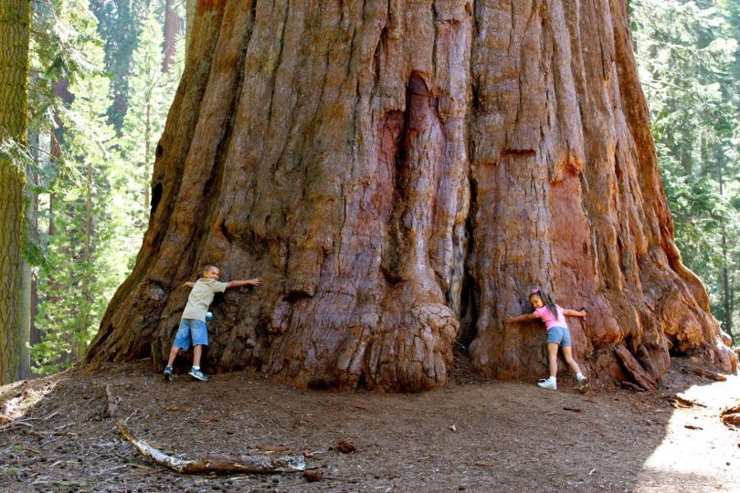 Giant Sequoia National Monument - 2