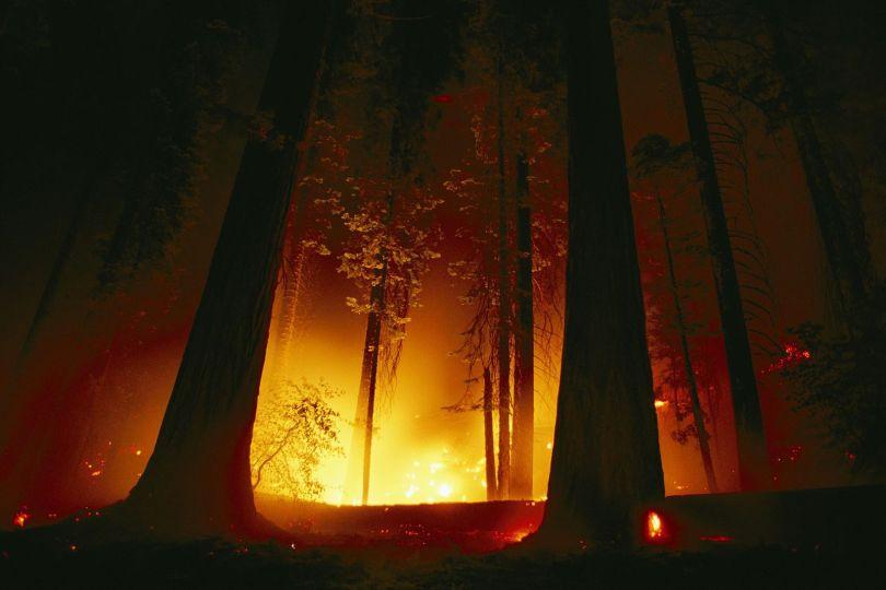 Giant Sequoia National Monument - 3