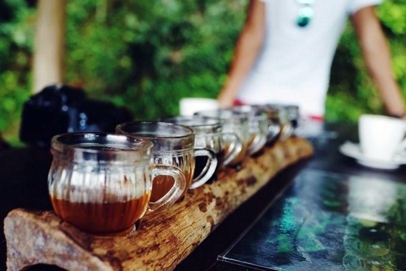 Kopi Luwak - Café - 6