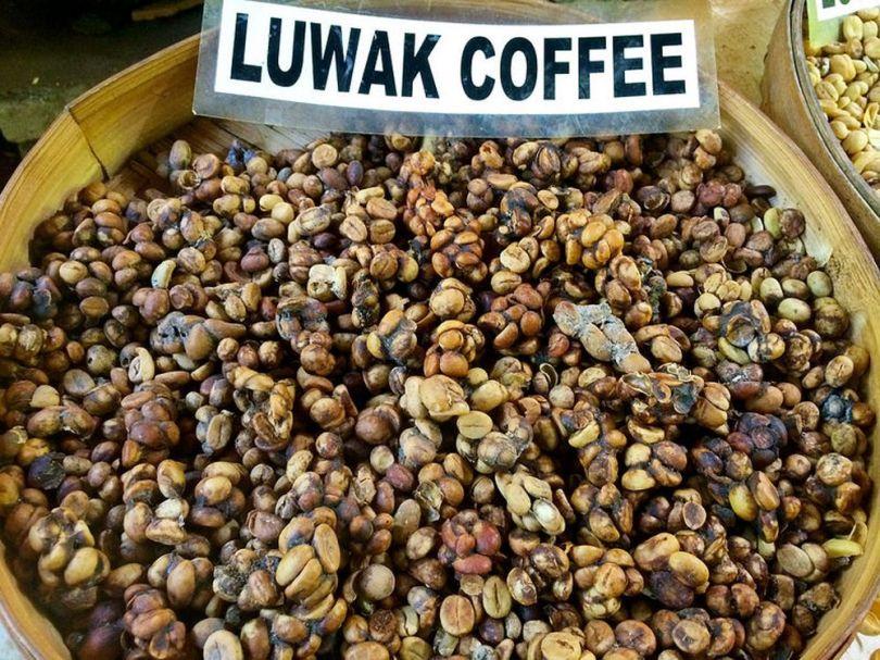 Kopi Luwak - Excrements - Café - 3