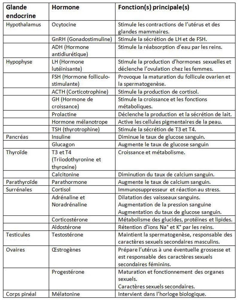 Système endocrinien et hormonal - 5