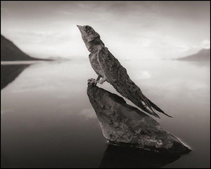 Tanzanie - Lac Natron - Animaux pétrifiés - 2