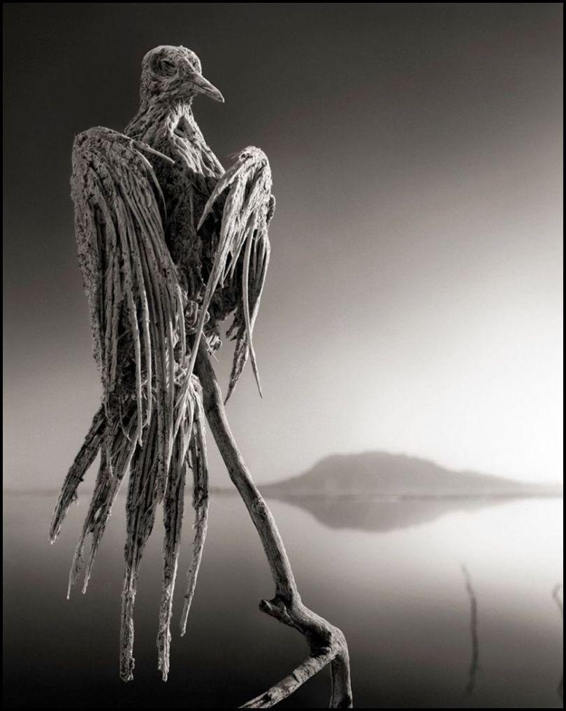 Tanzanie - Lac Natron - Animaux pétrifiés - 3