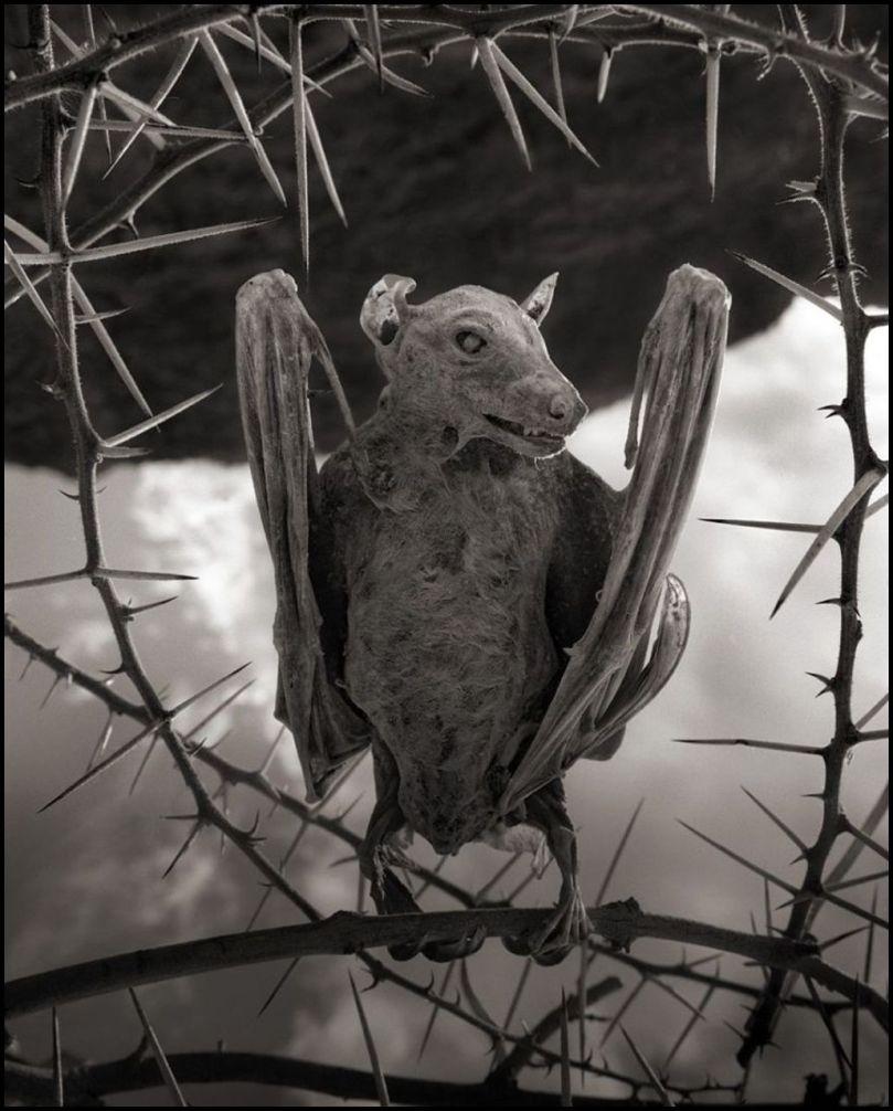 Tanzanie - Lac Natron - Animaux pétrifiés - 4