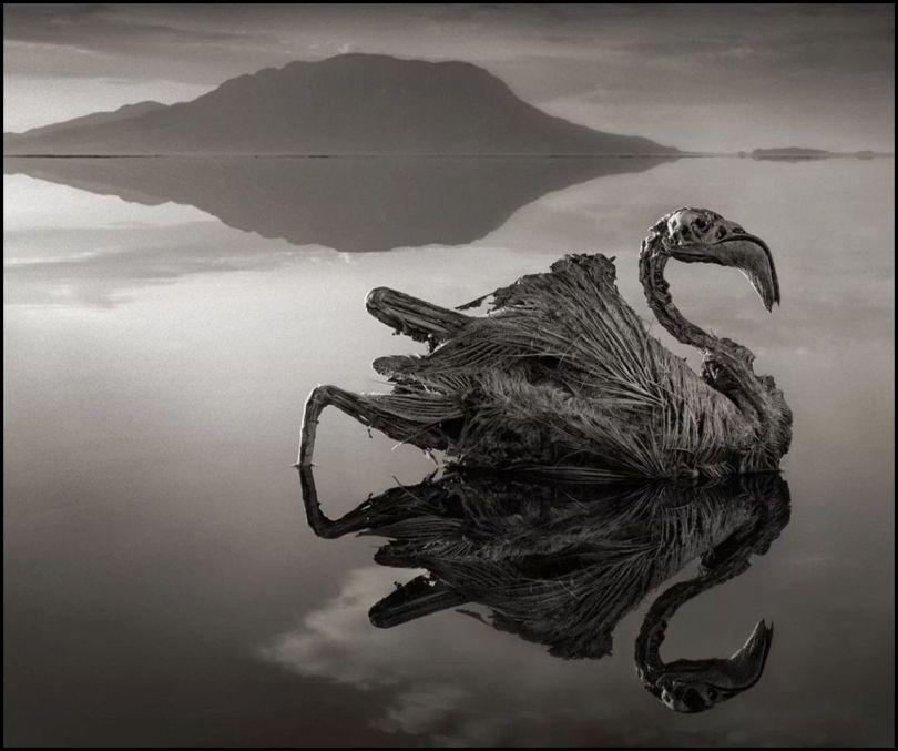Tanzanie - Lac Natron - Animaux pétrifiés - 5