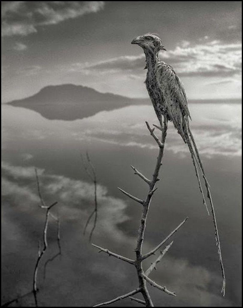 Tanzanie - Lac Natron - Animaux pétrifiés - 6