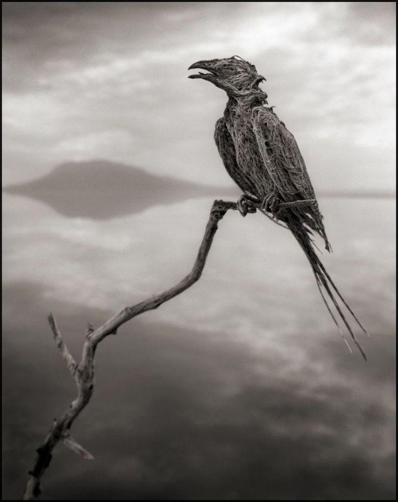 Tanzanie - Lac Natron - Animaux pétrifiés - 7