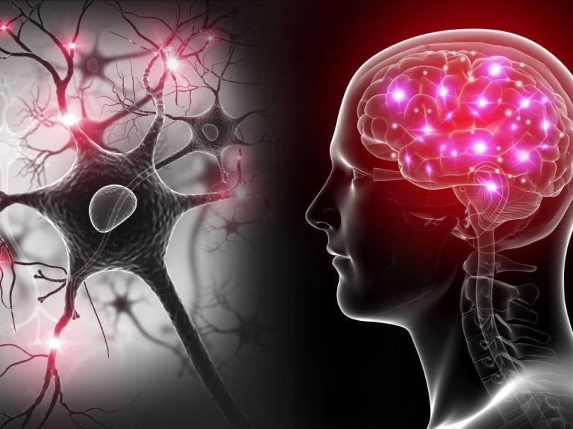 Bioquark - Cerveau - Neurones