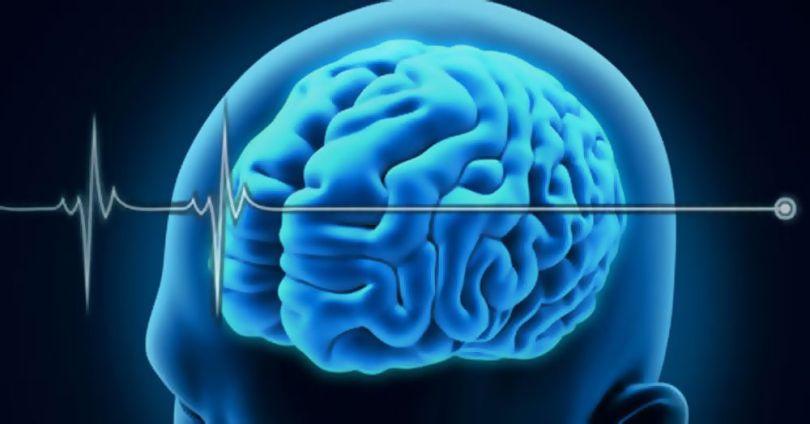 Bioquark - Cerveau