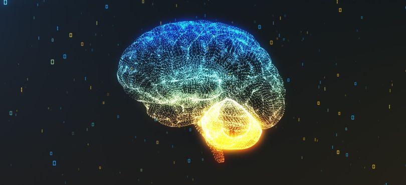 Cervau - Brain - 2