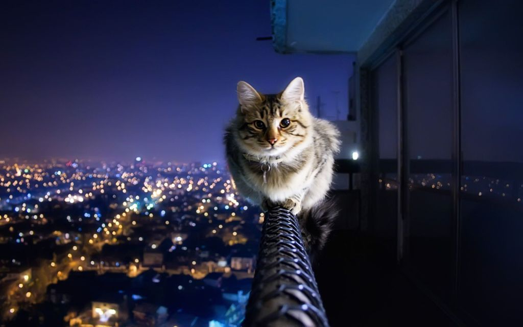 """Résultat de recherche d'images pour """"chat"""""""