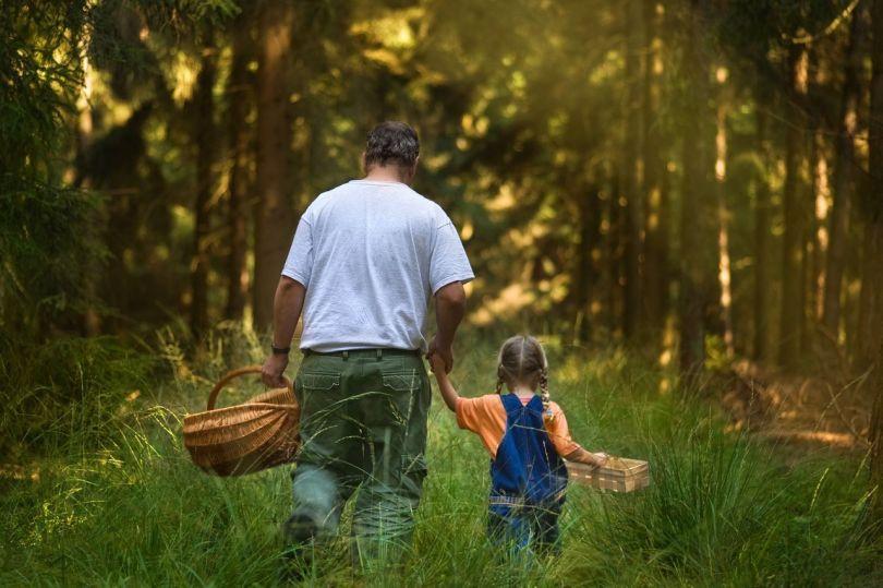 Promenade dans les bois - Père - Enfant