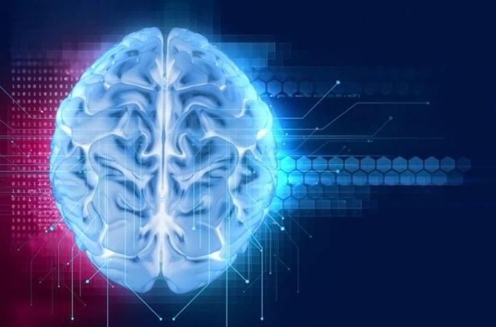 Cerveau - Brain