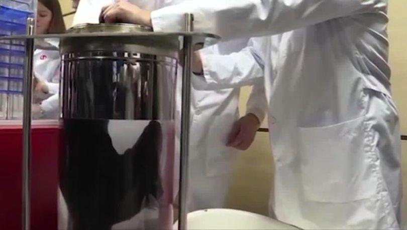 Chien - Respiration liquide - 3