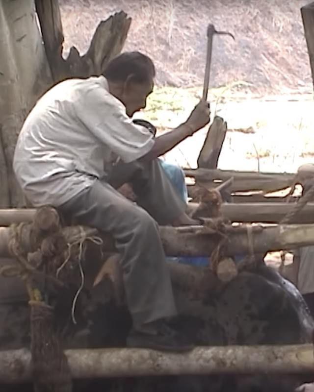 Eléphant - Torture - Maltraitance - 4