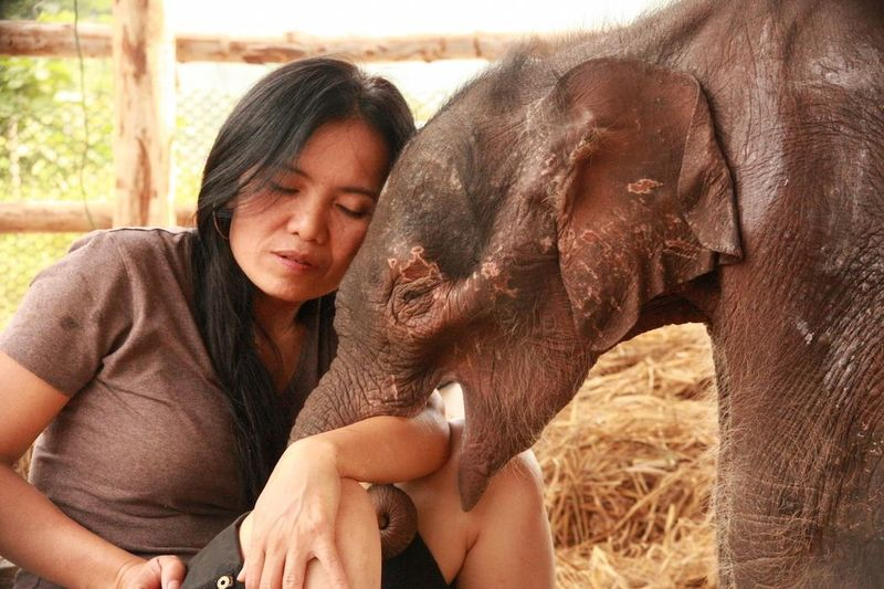 Eléphanteau - Sangduen - Elephant Nature Park