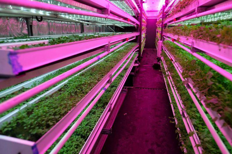 Cette ferme futuriste peut produire 5 acres de nourriture avec 99% moins d'eau