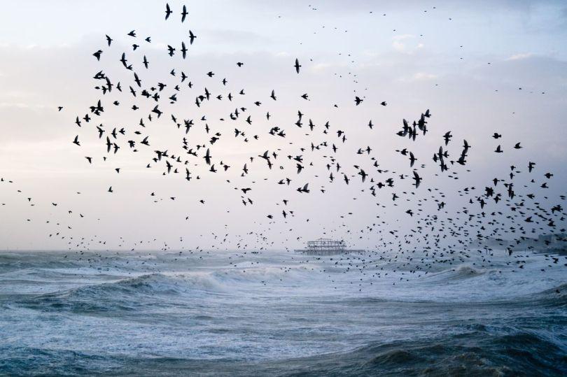 Formations d'oiseaux - 1