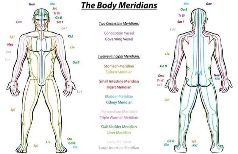 The body meridians