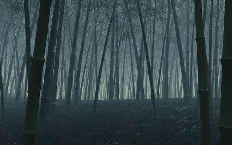Vallée du Heizhu – Chine - Bambou noir - 1