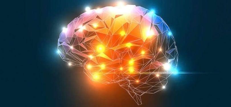 Cerveau modélisé